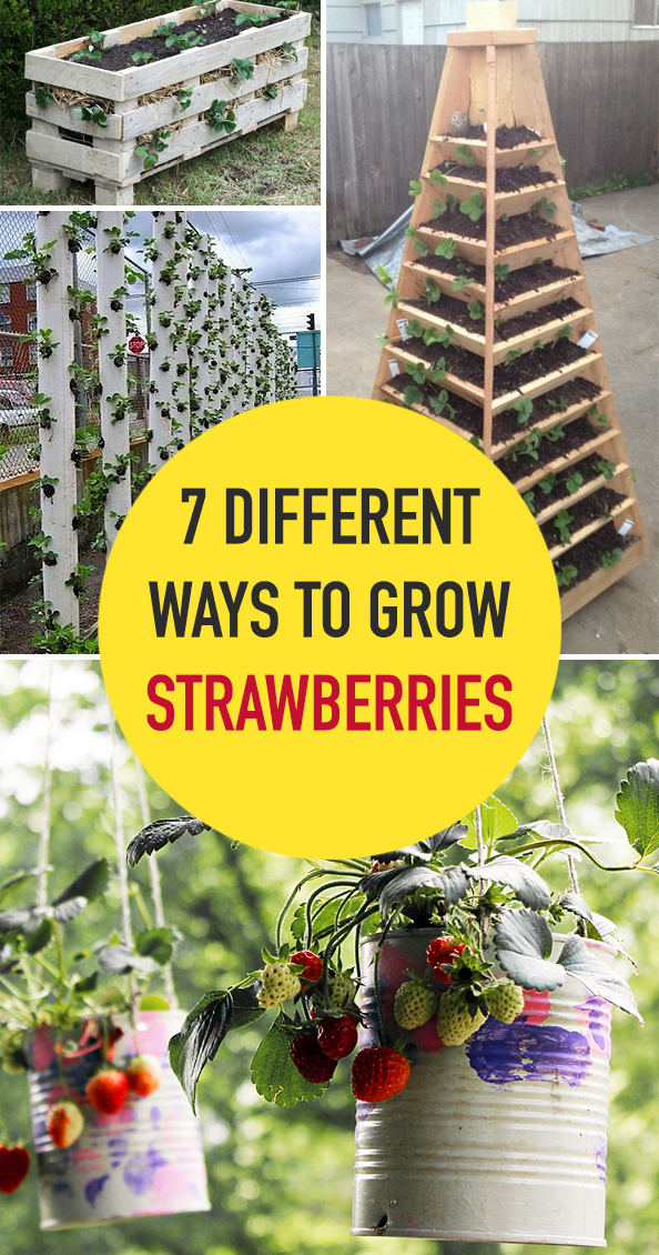 7 Different Ways to Grow Strawberries