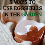5 Ways to Use Eggshells in The Garden