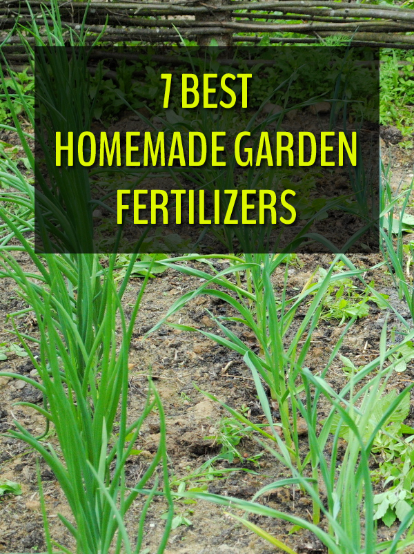 7 Best Homemade Garden Fertilizers