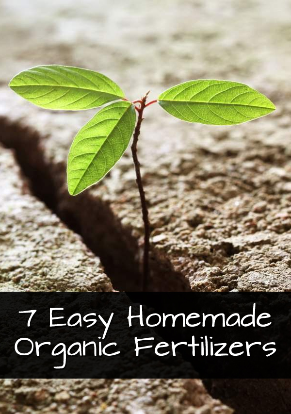 7 Easy Homemade Organic Fertilizers That Will Make Your Garden Bloom