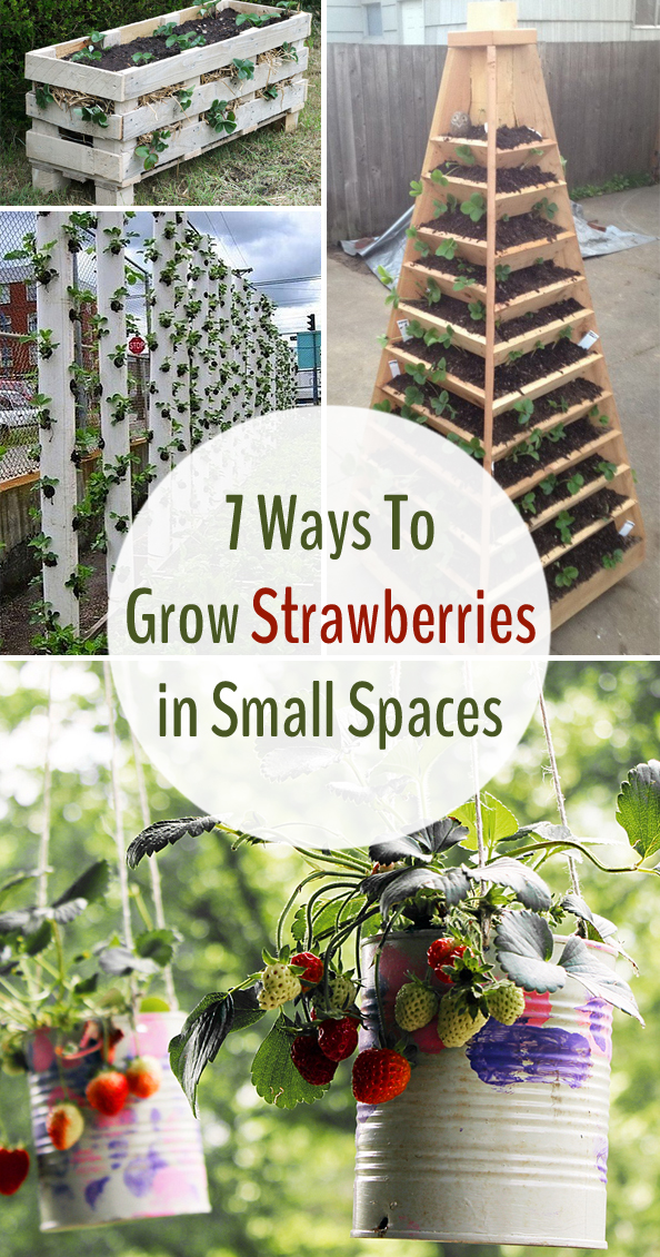 7 ways to grow strawberries in small spaces - Growing in small spaces image ...