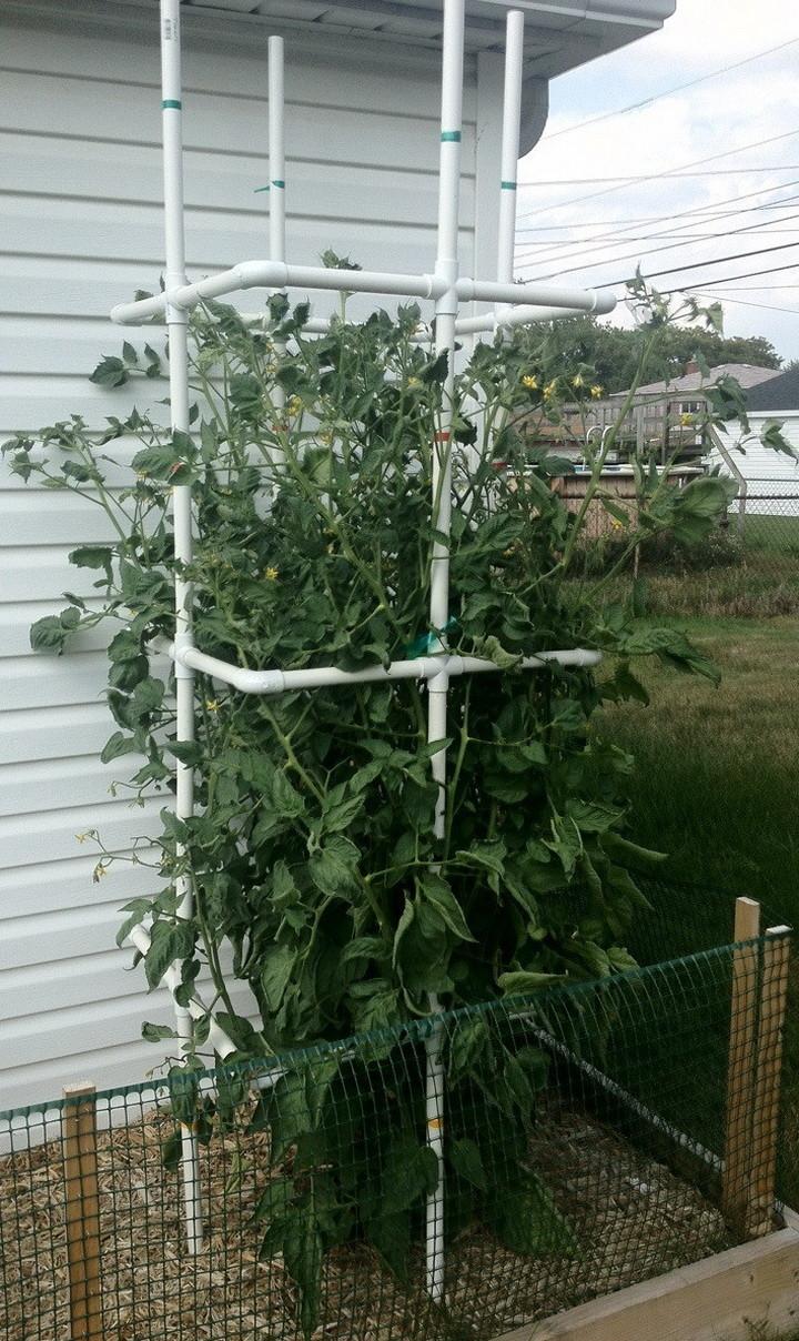 PVC Tomato Cages