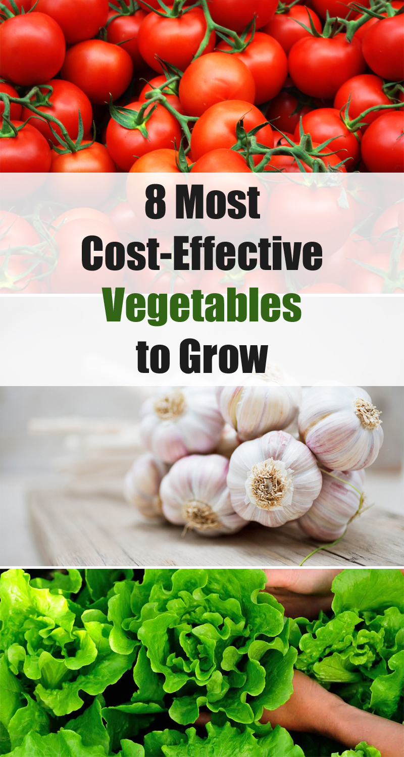 8 Most Cost-Effective Vegetables to Grow