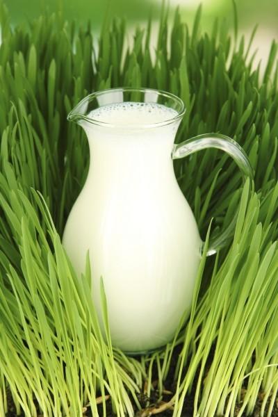 Feeding Plants with Milk