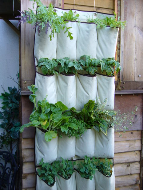 Herb Garden in a Shoe Organizer