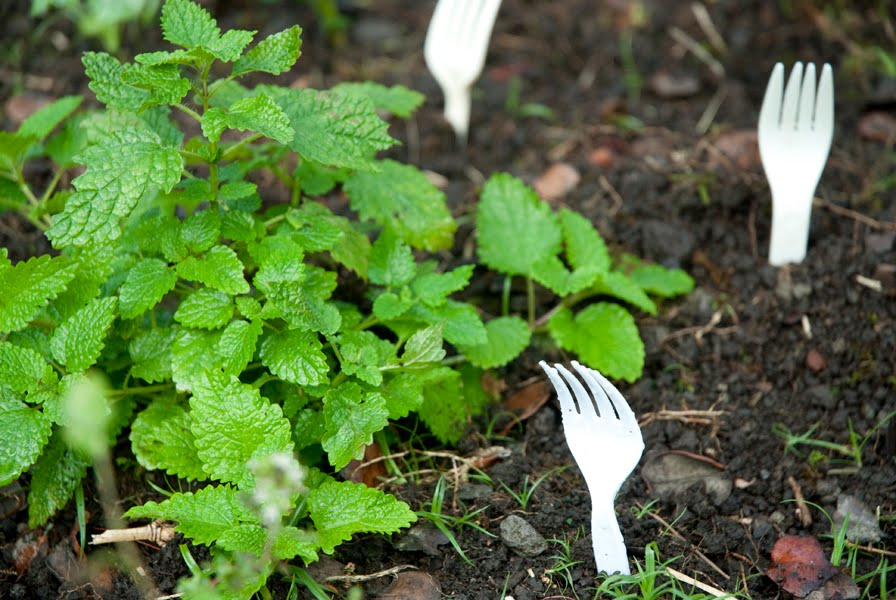 Put plastic forks in the soil to prevent animals from getting into your garden