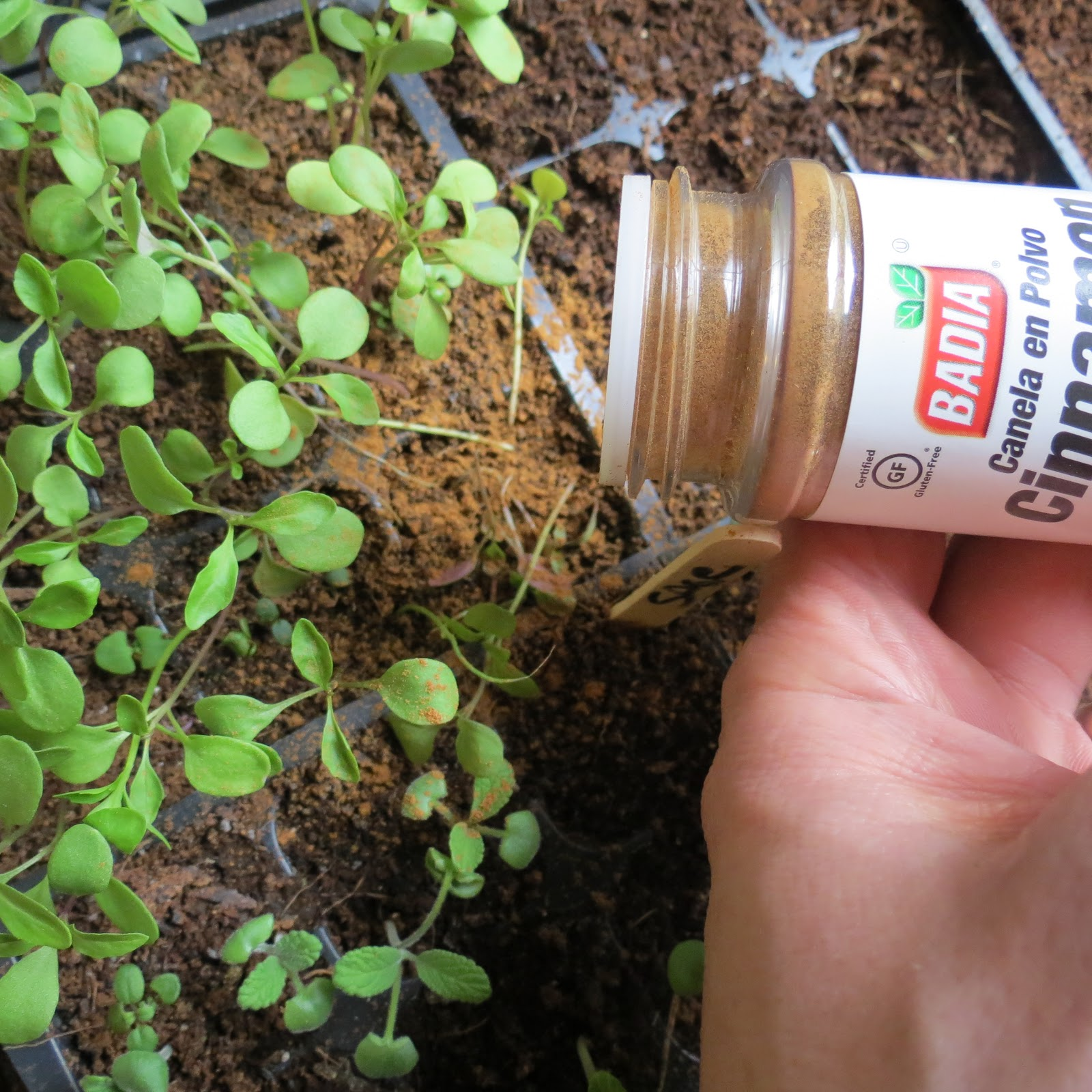 Using Cinnamon on Seedlings