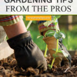 40 Gardening Tips from The Pros