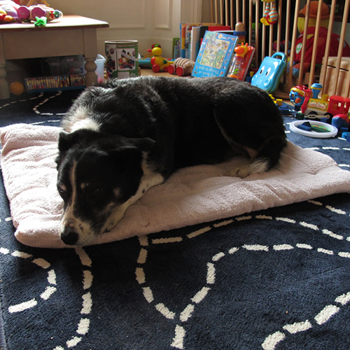 Towel Dog Bed