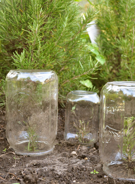 Mason Jar Greenhouse