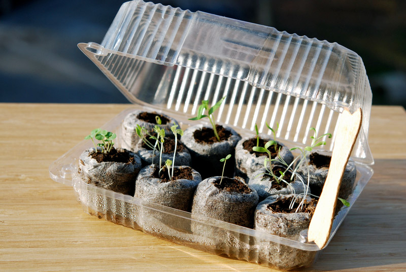 Mini Greenhouse out of a Recyclable Plastic Container