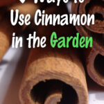 5 Ways to Use Cinnamon in the Garden