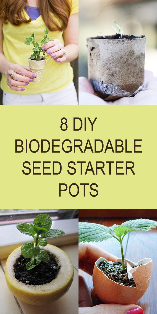 8 DIY Biodegradable Seed Starter Pots