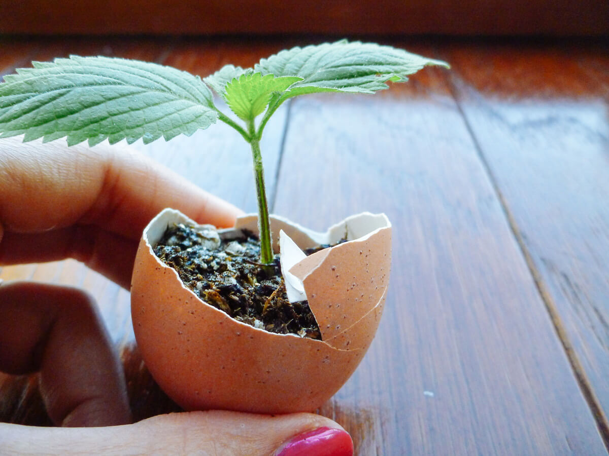 Eggshell Seed Starting Pots